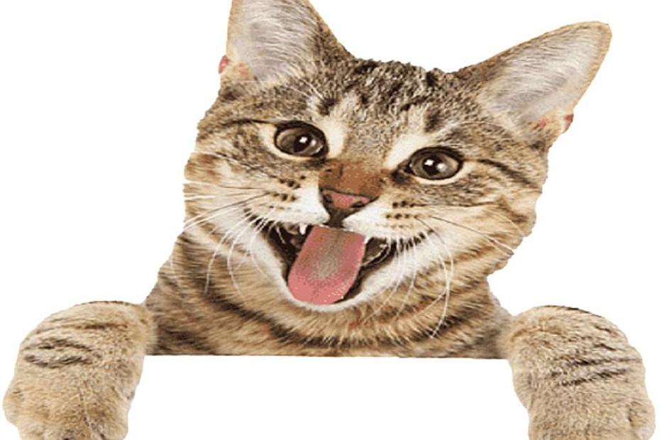 curiosita uccise gatto 1