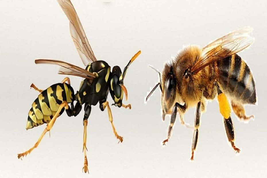 api vespe e1592297433201